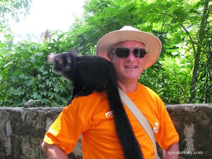 Lemur. Mauritius