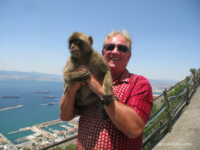 Monkey. Gibraltar